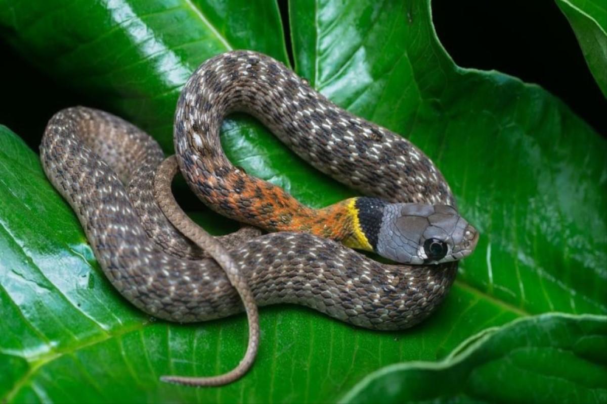 Health Guide Physiology Topics, Coronavirus From Snakes to Humans Coronavirus Snakes