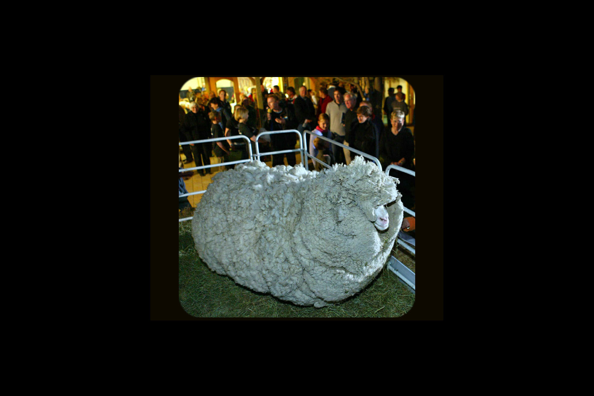"Self Discipline, "" sheep symbolize people who have no Self Discipline"""